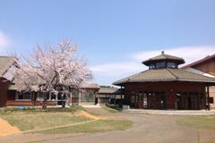 4月の桜003